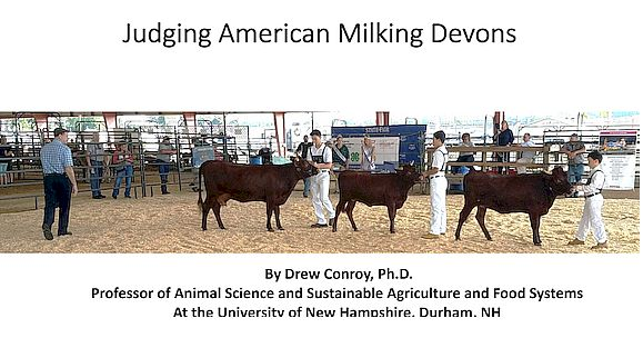 Judging Milking Devons